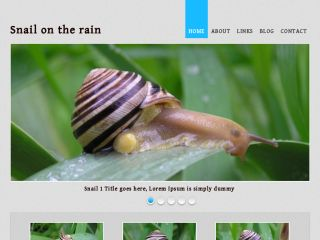 Snail on the rain